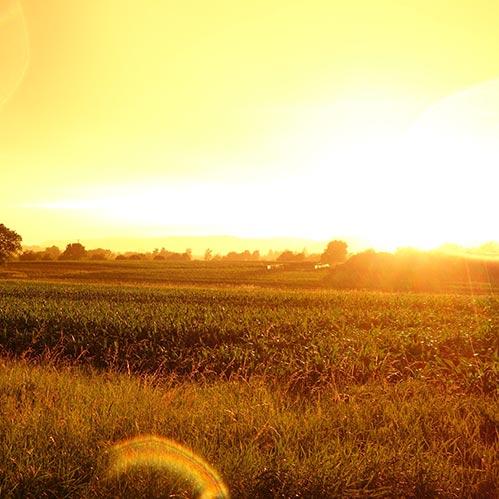 Backdrop: Sonnenuntergang im Feld