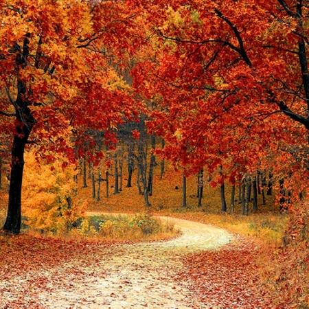 Backdrop: Herbstlichtung