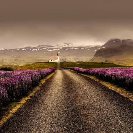 Backdrop: Lavendel im Sonnenuntergang