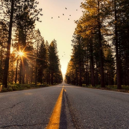Backdrop: Wald Allee Sonnenuntergang